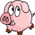 大猪的照片