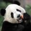 PandaKiller